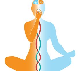 La respiration (Pranayama)
